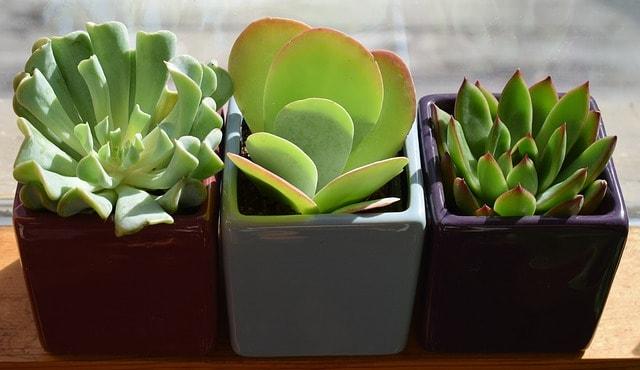 succulent arrangement gift
